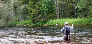 Flyfishing trout