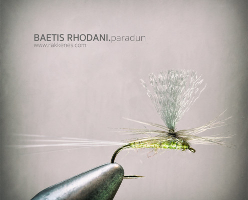 Baetis parachute