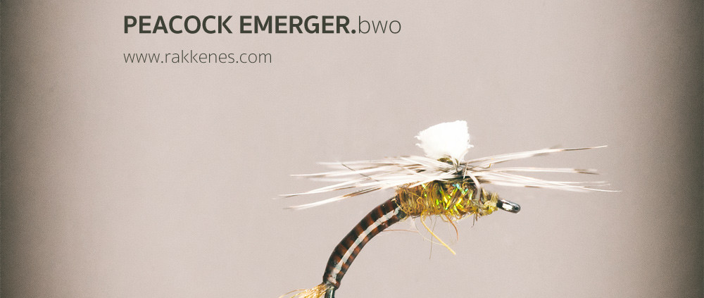 Peacock Mayfly Emerger