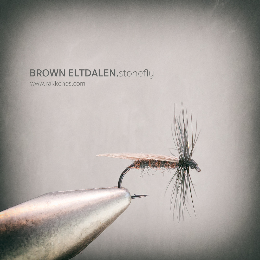 Brown Eltdalen Stonefly