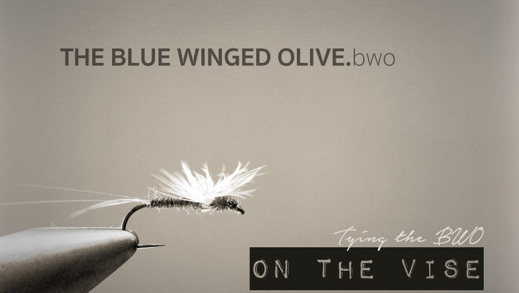 BWO Blue winged olive