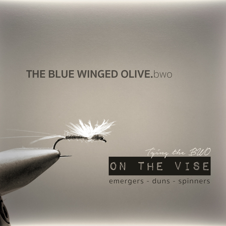 BWO Blue winged olive