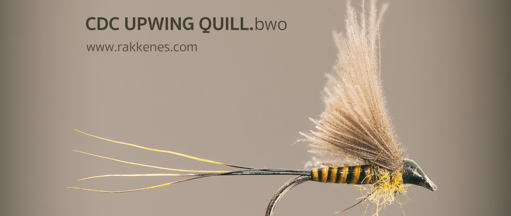 BWO Quill and CdC