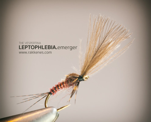 Leptophlebia Vespertina Emerger