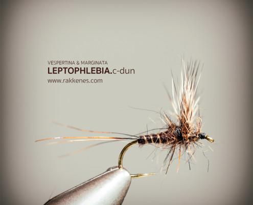 Leptophlebia Marginata Comparadun