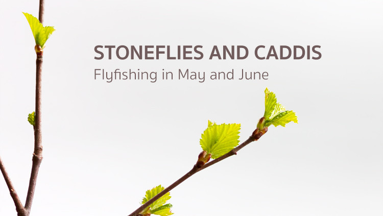 Stonefly and Caddis in May