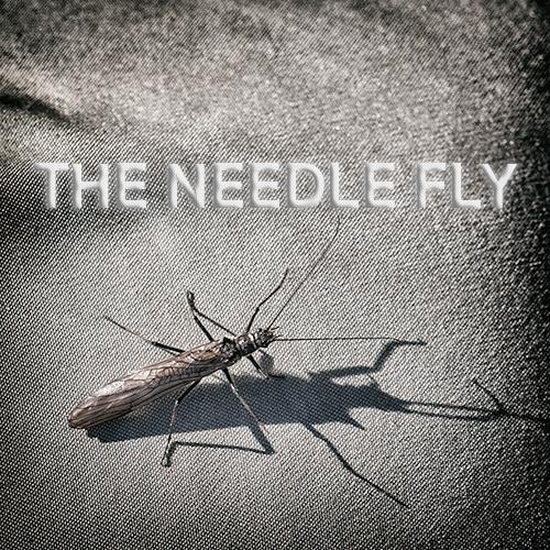 Needle Fly