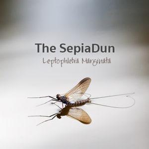 The Sepia Dun - Leptophlebia Marginata