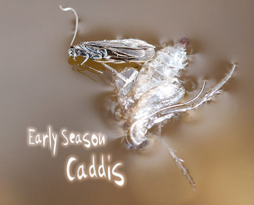 Early Season Caddis