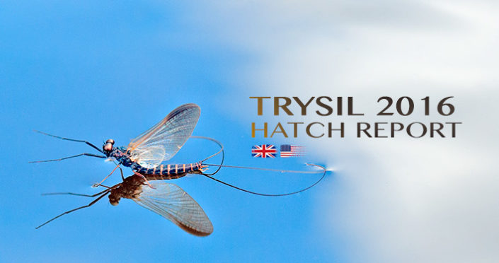 Insect and Hatch Report
