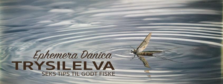 Danica i Trysilelva