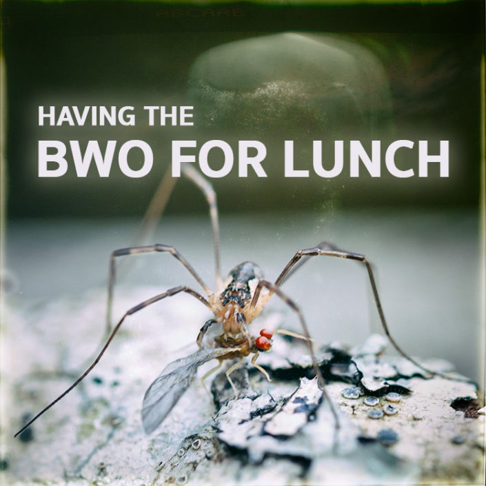 BWOs for lunch