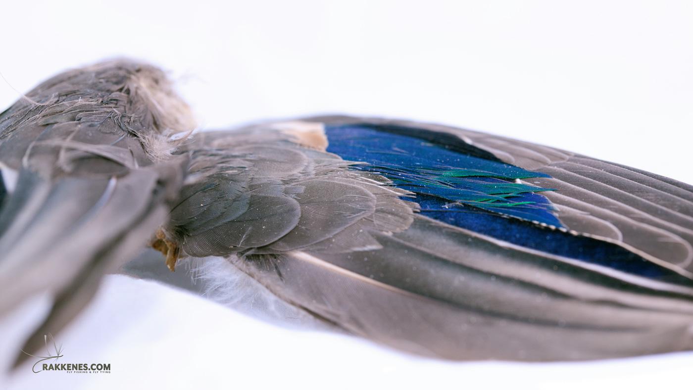 Plast i Fluefiske